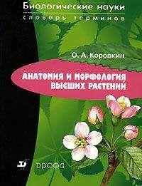 Олег Коровкин - Анатомия и морфология высших растений